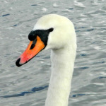 Memories of Half-term: Waterfowl and beaches near the New Forest