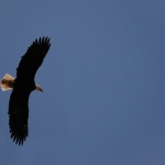 The Eagle, and Waiting to Discerning God's Will Before You Act