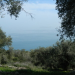 A Hike up Corfu's Mount Pandokrater; an abundance of wild spring flowers