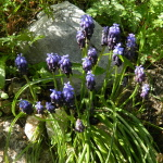 Spring Wild Flowers in Corfu (Guest post by Roy Mathias)