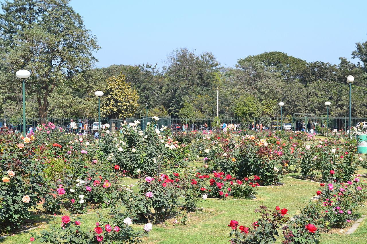 Rose Garden, Jubilee Park, jamshedpur. (credit)