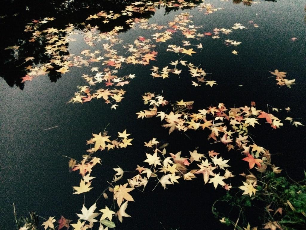 Photo 31-10-2015 16 54 30